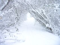 burza śnieżna Fotografia Stock