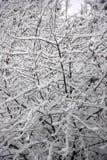burza śnieżna Zdjęcie Royalty Free