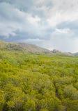 Burza nad mangrowe las Zdjęcia Stock