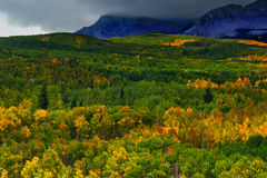 Burze Nad Osikowym lasem obrazy stock