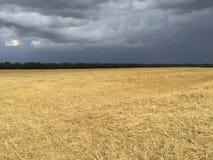 Burzowa łąka Zdjęcie Stock