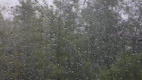 Burzowy dzień, nadokienny szkło behind z waterdrops i drzewa, zdjęcie wideo