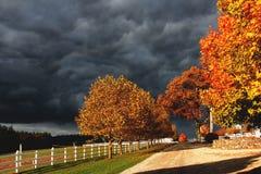 Burzowy niebo i jesień liście Fotografia Stock