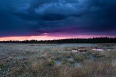 Burzowy zmierzchu niebo nad bagnem z cottongrass obraz stock