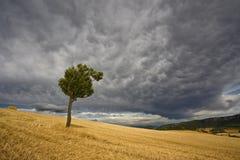 burzy drzewo Obraz Royalty Free