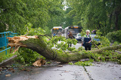 The bus conductor looks at the fallen after a thunderstorm a tree, blocked the street Royalty Free Stock Images