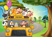 A bus full of zoo animals Royalty Free Stock Image