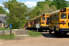 Bus line up for afterschool Delivery. Five buses line up for after school delivery.  Trees and blue sky Royalty Free Stock Images