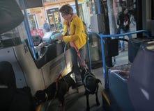 Bus pubblico con gli animali domestici immagini stock libere da diritti