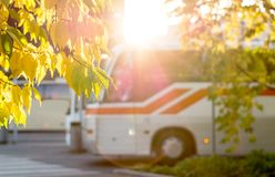 Bus at station framed by autumn colored leaves from trees. Sunny public transportation concept Royalty Free Stock Photography
