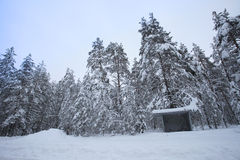Bus stop in winter snowy forest stock images