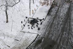 Busca de muitos pombos para a neve sob a neve Foto de Stock