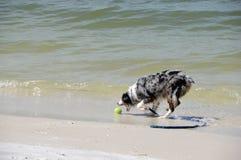 Busca na praia Imagens de Stock