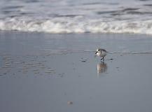 Buscar el alimento en la playa Fotos de archivo