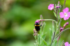 Buscar el polen Fotografía de archivo libre de regalías