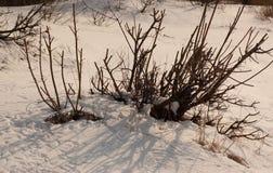 busch Stockfotografie