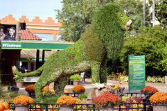 Busch Gardens topiary lion. Topiary lion at the entrance to Busch Gardens Tampa Stock Image