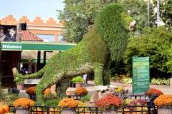 Busch ogródów topiary lew Obraz Stock