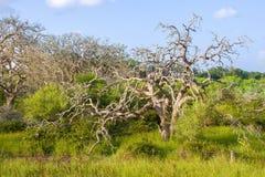 Buschgras-Hauptbäume auf der Seite einer Landstraße Lizenzfreie Stockbilder