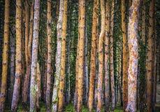 Am Rande des Waldes Stockbild