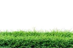 Buschzaun Lizenzfreie Stockbilder