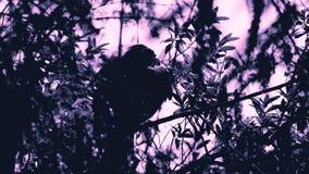 Buse exposante au soleil élégante dans l'arbre Photographie stock libre de droits