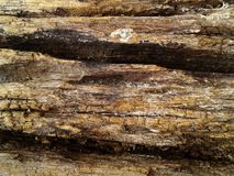 Buse silicified wood yttersidatextur stil för spanjor för bakgrundscartagena colombia colonal de indias foto royaltyfria foton