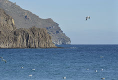 Busen seglar utmed kusten i Cabo de Gata Royaltyfri Fotografi