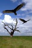 Buses au-dessus d'arbre s'arrêtant Image libre de droits
