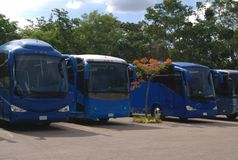 Buses. coaches Royalty Free Stock Image