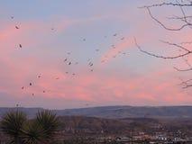 Buses de Cathartidae d'aves d'aura de Cathartes de vautours de Turquie montant au coucher du soleil près de St George Utah dans l images stock