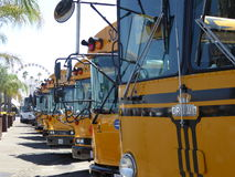 Yellow Buses parked  Royalty Free Stock Photo