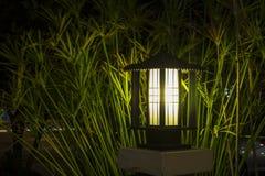 Bush światło na ogródach Obraz Stock