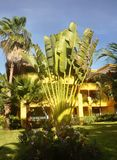 bush банана Стоковое Изображение RF