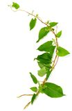 bush ветви переплел стоковое фото rf