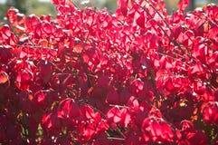 bush осени Стоковое Изображение RF