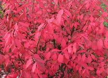 bush предпосылки горящий Стоковые Изображения