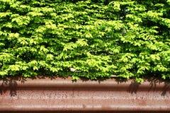 bush предпосылки стоковое фото rf