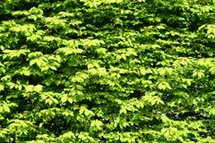 bush предпосылки стоковые изображения rf