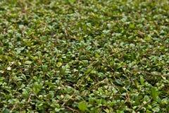 bush предпосылки стоковое изображение rf