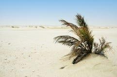 bush сиротливый Стоковая Фотография RF