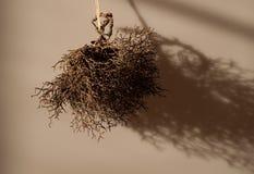 bush сухой Стоковое Изображение RF