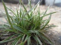 Bush травы Стоковое Изображение