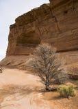 bush уединённый стоковые фото