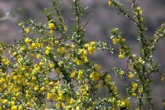 bush цветет желтый цвет поле глубины отмелое подкрашивано Стоковое Изображение RF