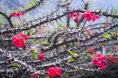 bush цветет красный цвет стоковые изображения