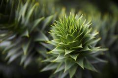 bush шиповатый Стоковые Изображения