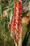 bush щетки бутылки Стоковое Фото