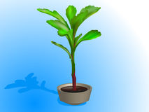 Bush. Indoor plant in a flowerpot Stock Photography