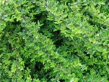 bush Стоковое фото RF